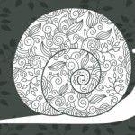 Cute snail picture