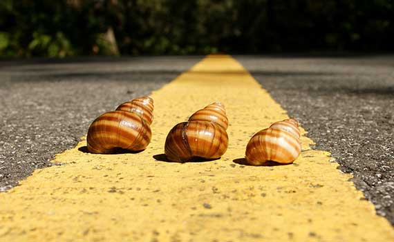 3 snails on the highway