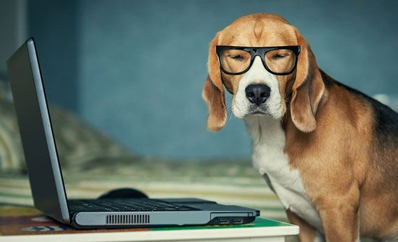 Sleepy dog working with laptop