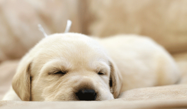 Sleepy Puppy and all good things that are fuzzy