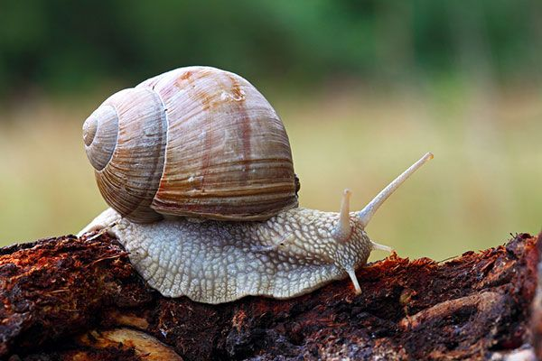 Snails are slow