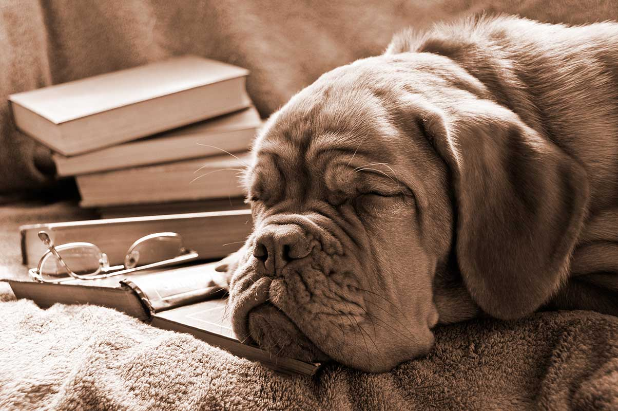 Dog fell asleep reading